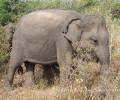 【蘭卡路上7】大象很可愛,但可不可以不要再來一隻